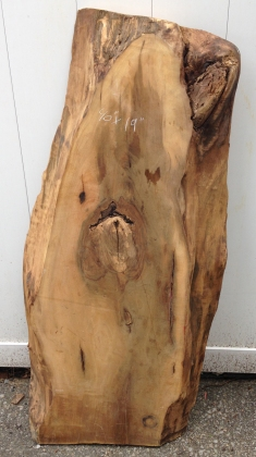 Spalted Black Walnut 05